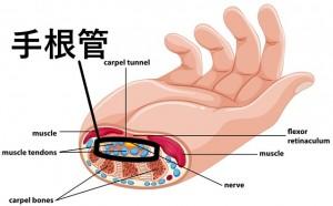 手根管 場所 骨と筋肉の間