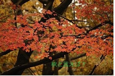 秋といえば