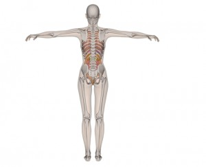 骨 全身 関節