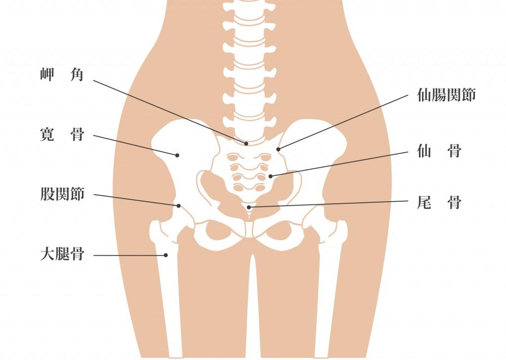 骨盤の各名称