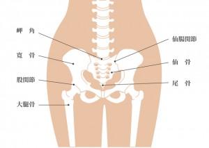 尾てい骨 腰椎 仙骨