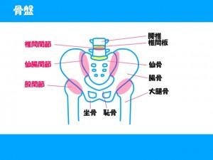 骨盤 関節 恥骨 尾骨 仙骨 寛骨