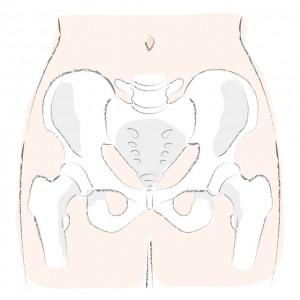 骨盤 股関節