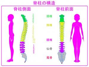 背骨 仙骨 腰椎